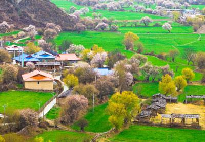 Bome-Peach-Blossom,Tibet