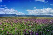Sichuan Tibet litang Scenery Tour