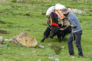 Tibet Trekking: Ganden to Samye Monastery trekking picture