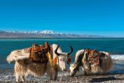 Japan Tibet Travel Namtso Lake