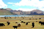 Top 9 Popular Tibet Trekking Trails-Yamdrok-Lake Trekking