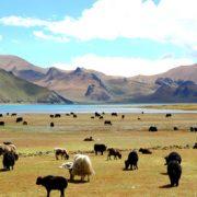 Top 9 Popular Tibet Trekking Trails-Yamdrok-Lake Trekking