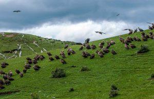 Sky Burial near Seda Monastery